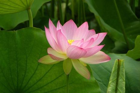 keyakinan terhadap tiratana ajaran buddha