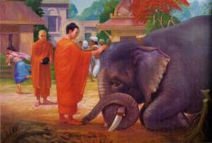 Menaklukkan Gajah Nalagiri - Cinta Kasih sesuai ajaran Budha