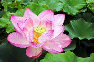 hidup itu singkat menurut agama buddha by tony yoyo di TisaranaDotNet