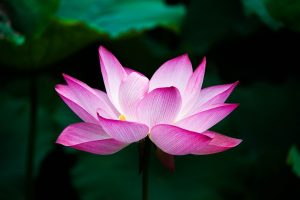 kematian dalam agama Buddha share by tisarana dot net