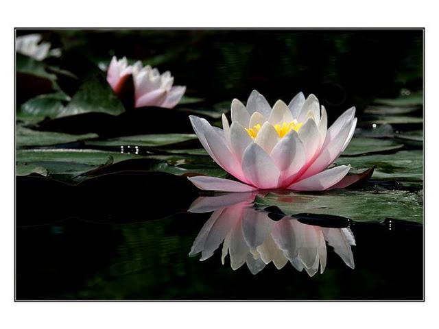 meditasi cinta kasih dalam agama buddha share by tisarana dot net